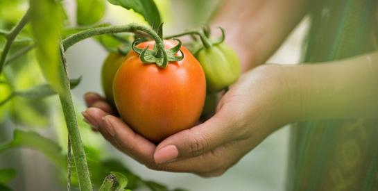 財政部為促進土地有效利用,同意小型國有公設地得委管予縣(市)政府建置「田園基地」作為種植可食植物使用